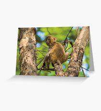 Rhesus Macaque (Macaca mulatta) Greeting Card