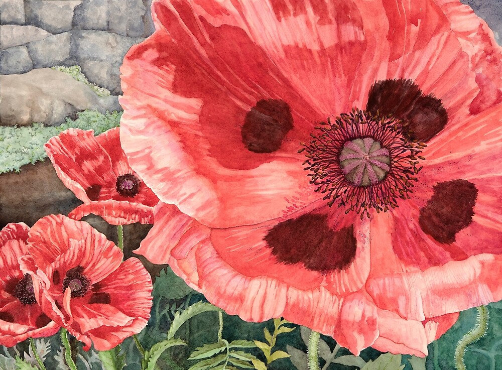 Red Poppies Watercolor by Gayle Mahoney