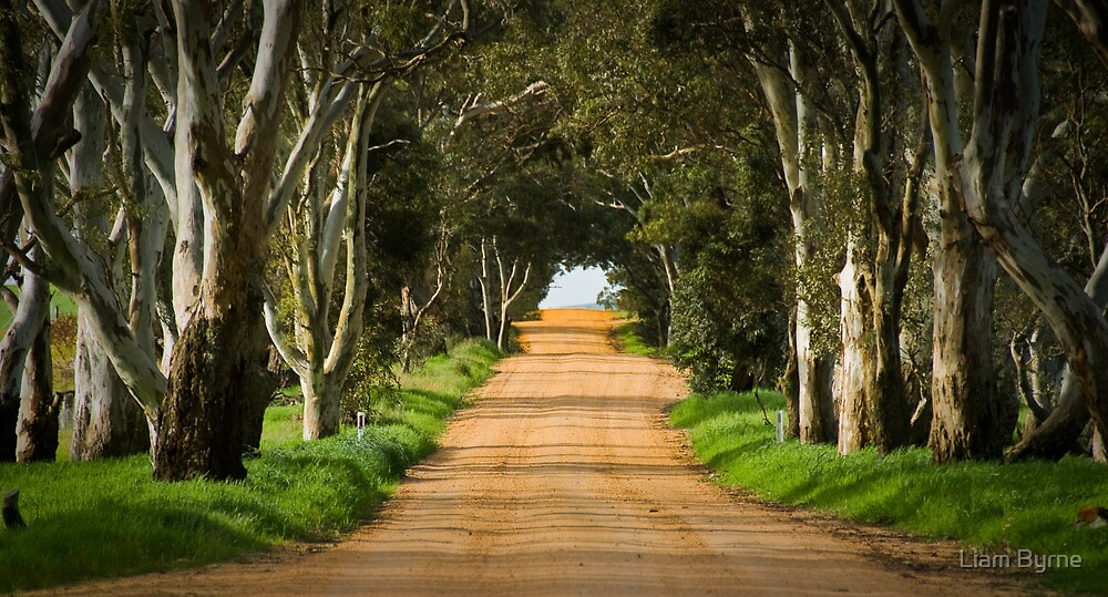 Take Me Home - Western District, Victoria by Liam Byrne