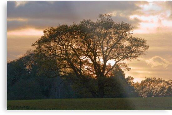 Autumn Sunset by Geoff Carpenter