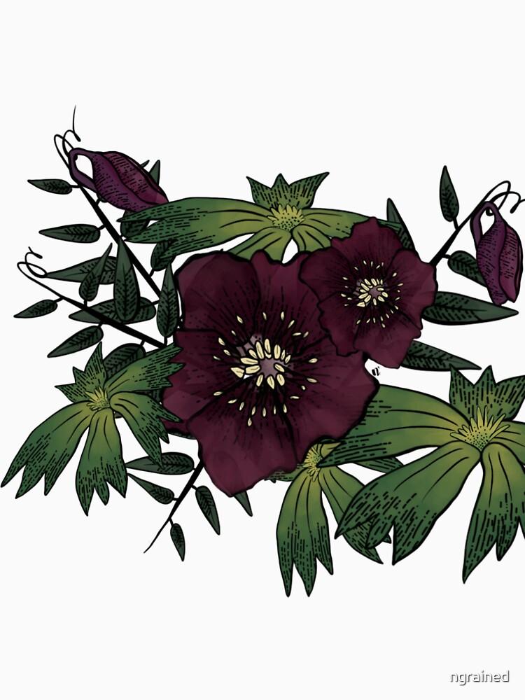 Dark Purple Flower Bloom - Helleborus by ngrained