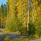 DUNGENESS RIVER IN FALL by Elaine Bawden