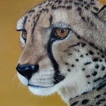 African wildlife series - Cheetah by AnetDuToit