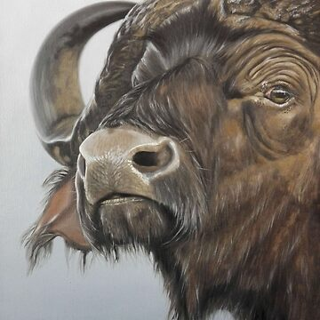 African wildlife series - Buffalo by AnetDuToit