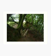 forest pathways in lydford gorge Art Print