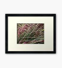 Purple Grasses Majesty Framed Print