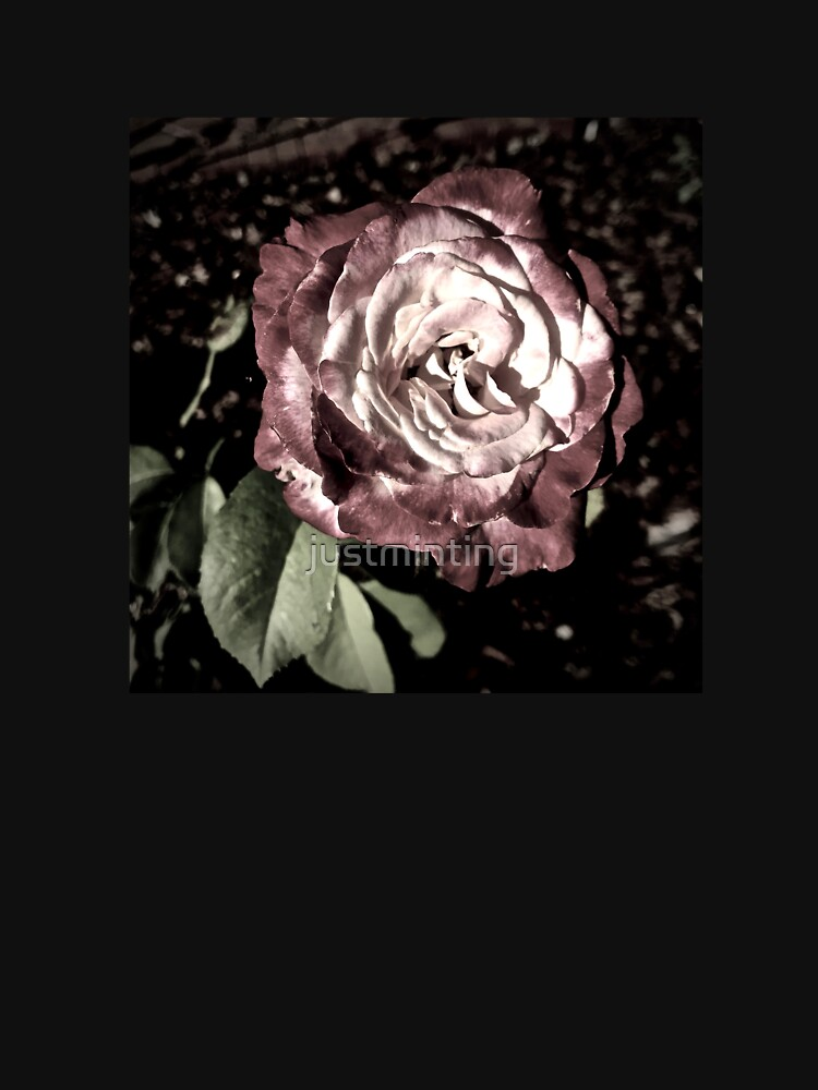Winter Park October Rose by justminting