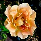 Orange You Glad You Stopped to Smell the Roses by justminting