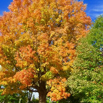 Glorious Fall by Shulie1