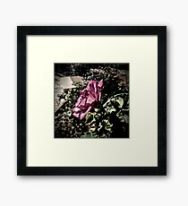 Rose in Profile Framed Print