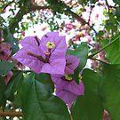 Purple blooms by Elena Skvortsova