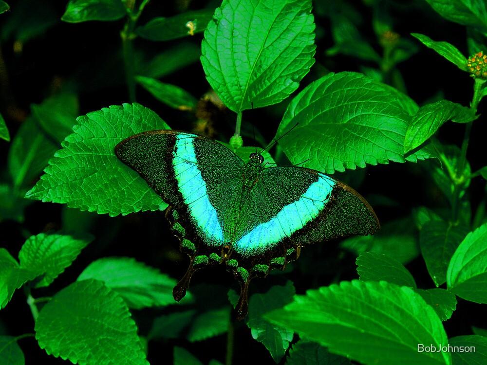 Hiding --- Emerald Swallowtail by BobJohnson