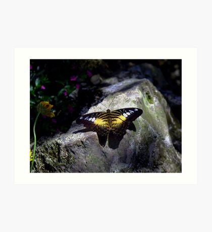 Hard Landing--Clipper Butterfly Art Print