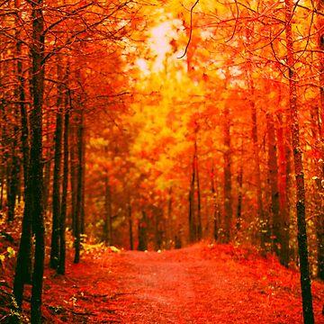 Rot und Orange Herbst II von va103