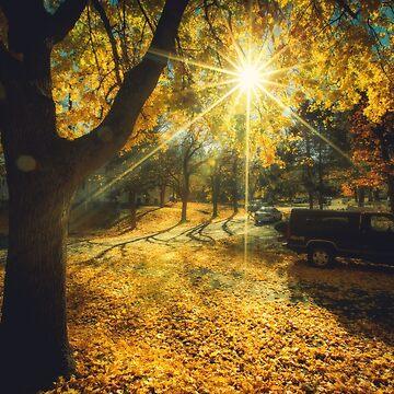 Das letzte Wochenende des beruhigenden gelben Herbstes von va103