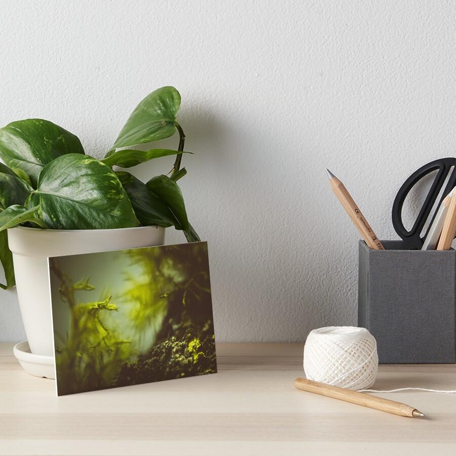 Lichen (moss) in a fog Galeriedruck