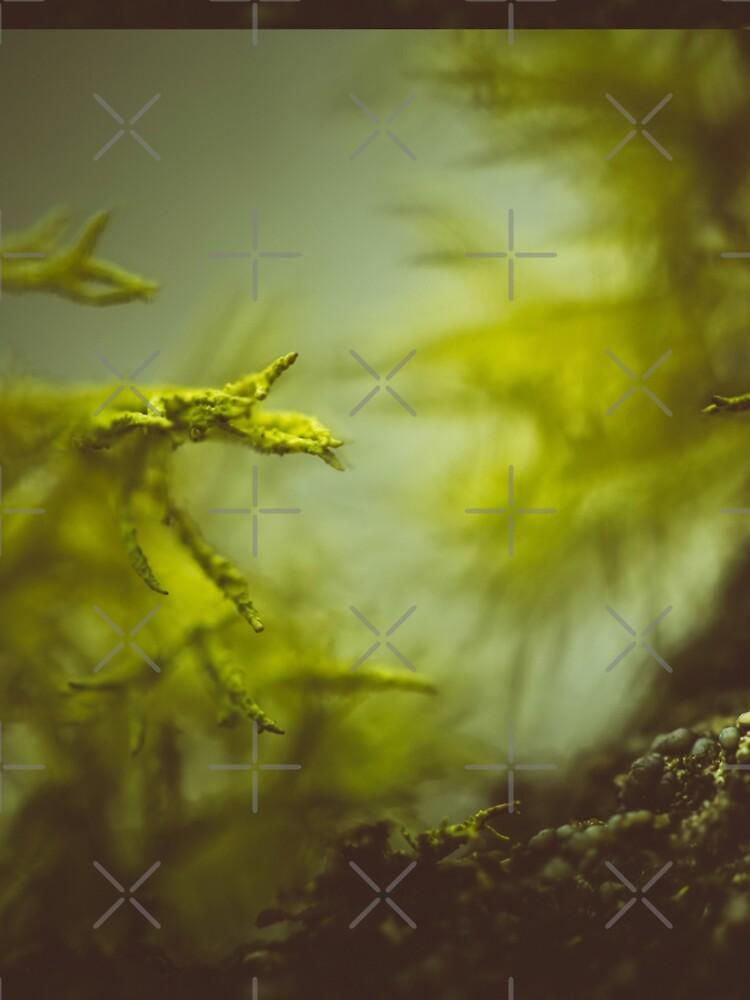 Lichen (moss) in a fog von va103