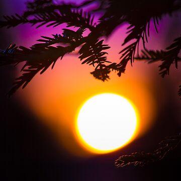 Kalifornischer Sonnenuntergang: Dächer und Kiefern von va103