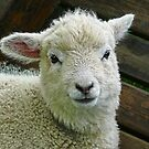 Gentle Lamb by Susie Peek