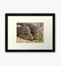 Happy as two Pigs in....... Framed Print
