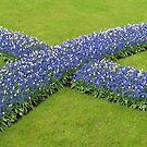 Die Big Blue X - Keukenhof Gardens von BlueMoonRose