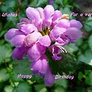 Happy Birthday ..Card, purple flower by MaeBelle