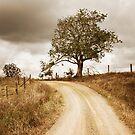 Golden path by simon gleeson