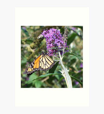 September Monarch 2 Art Print