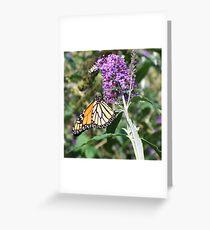 September Monarch 2 Greeting Card