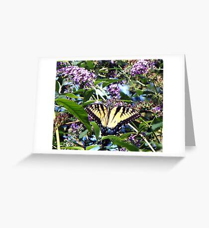 September Tiger Greeting Card