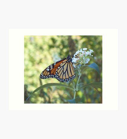 October Monarch Art Print