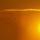 Sand Crane Sunset by the57man