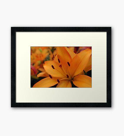 Genus Lilium Framed Print