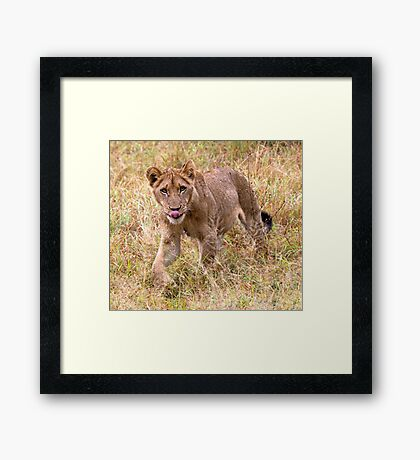Lion Cub Framed Print