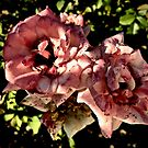 Roses Two By Two by justminting