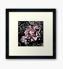 Ballerina Roses Framed Print