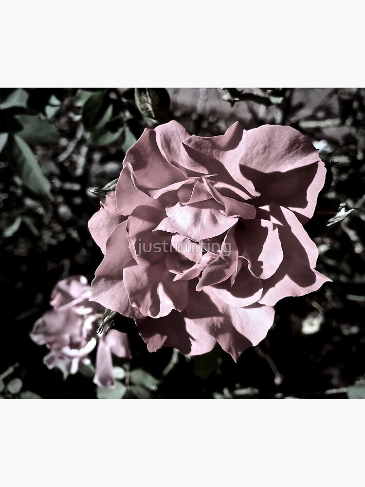 Ballerina Roses by justminting