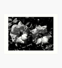 Winter Park Roses in Black and White Art Print