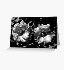 Winter Park Roses in Black and White Greeting Card
