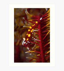 Crinoid shrimp on red crinoid - in detail  Art Print