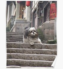 Shaggy Dog  on steps Poster