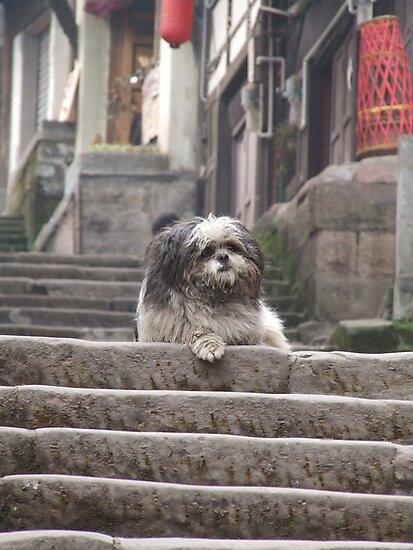 Shaggy Dog  on steps by davidleahy
