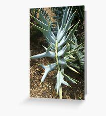 Encephalartos horridus Greeting Card