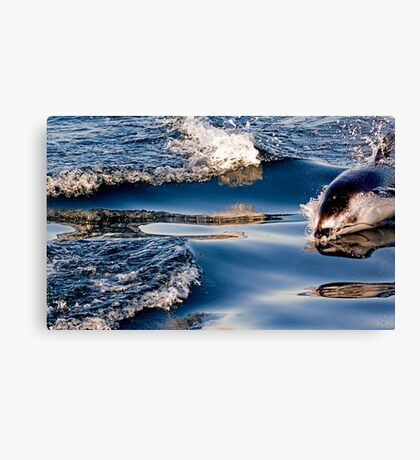 Gliding Through The Water Canvas Print