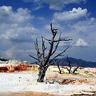 Desert Life by Vivek Bakshi