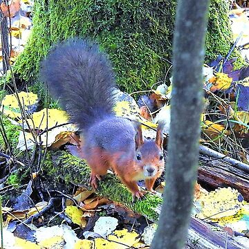Squirrel in nature by frugnusdesign