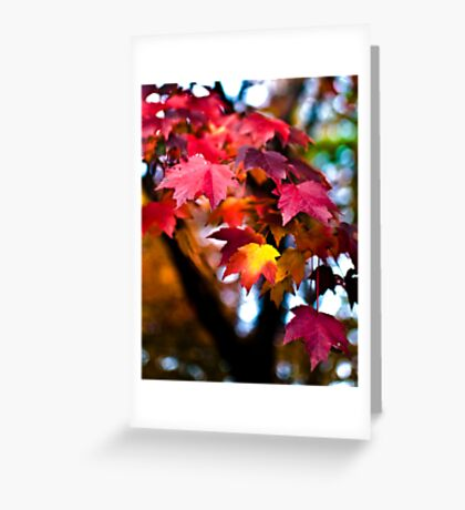 Colors of Maple Greeting Card