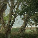 A sea view through the trees by Profo Folia