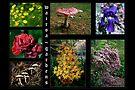Flowers & Fungi ~ Wairoa by LeeoPhotography