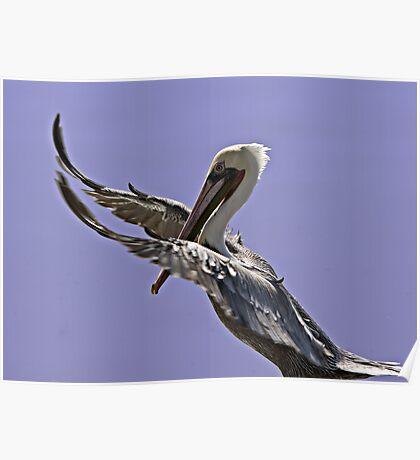 Pelican Tai Chi Poster